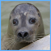 Mablethorpe Seal Sanctuary and Wildlife Centre, Mablethorpe