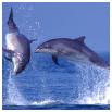 Sealife Adventures, Oban