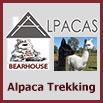 Bearhouse Alpacas Devon
