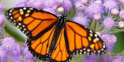 Butterfly Farm, Stratford-upon-Avon