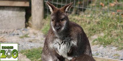 Exmoor Zoo, Exmoor
