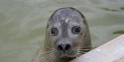 Mablethorpe Seal Sanctuary, Mablethorpe