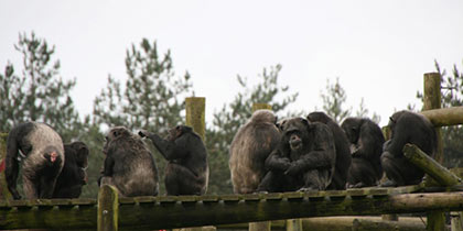 Monkey World, Wareham