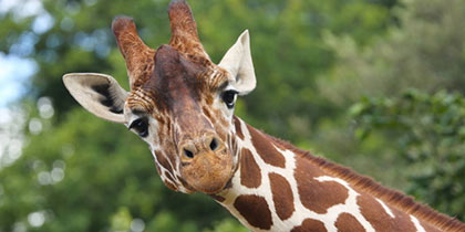 ZSL Whipsnade Zoo, Dunstable