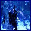 Skegness Aquarium, Lincolnshire