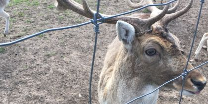 The Scottish Deer Centre, Cupar