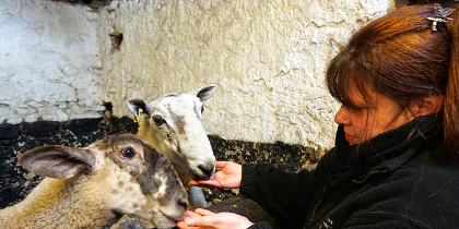 Willows Animal Sanctuary, Aberdeenshire