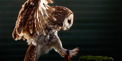 Scottish Owl Centre, Lothian