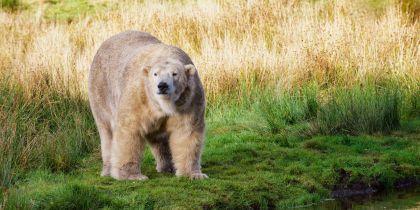 Highland Wildlife Park Kincraig