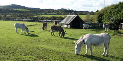 Isle-of-Wight-Donkey-Sanctuary-Wroxall