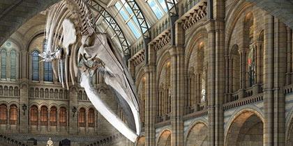 Natural-History-Museum-Kensington