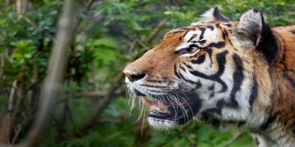 Shepreth-Wildlife-Park-Shepreth
