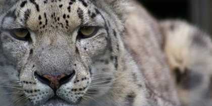 Welsh Mountain Zoo Colwyn Bay