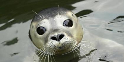 Sea Life Loch Lomond
