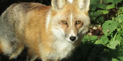 Ark Wildlife Park, Stickney