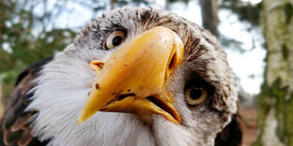 Birdsofprey