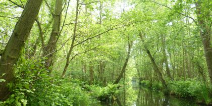 Bewilderwood Norwich