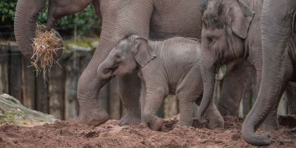 Chester Zoo, Chester
