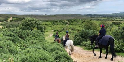 Arniss Equestrian, Fordingbridge
