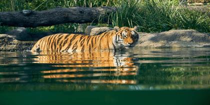 Paradise Wildlife Park Jpeg